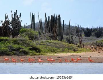 Flamingos at Goto Lake on the island of Bonaire.