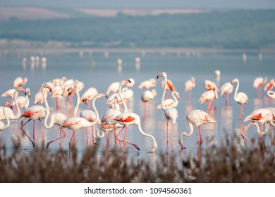 Flamingos in lagoon Fuente de Piedra