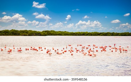 Flamingos at a lagoon Rio Lagartos, which is part of a natural reserve in Yucatan, Mexico