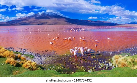 Flamingos in Laguna Colorada, Uyuni, Bolivia