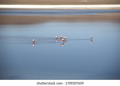 Flamingos in the lagune. Salar de Uyuni.