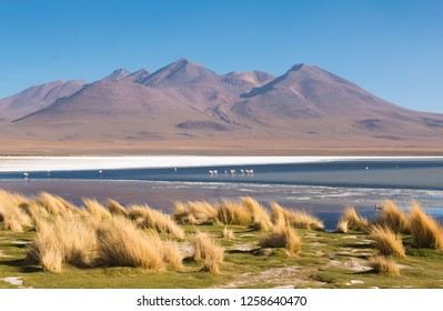 Flamingos on the colorful lake in the South of Bolivia near the Chilean and Peruvian border.