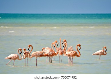 Flamingos on Isla Holbox, México