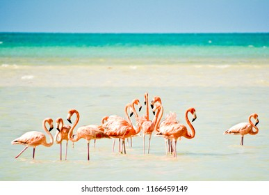 Flamingos on Isla Holbox in Mexico