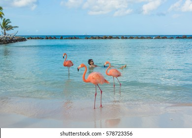 Flamingos on the tropical beach and man on background