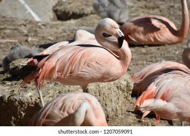 Flamingos paradise France