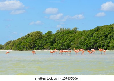 Flamingos at Rio lagartos in the Yucatan, Mexico