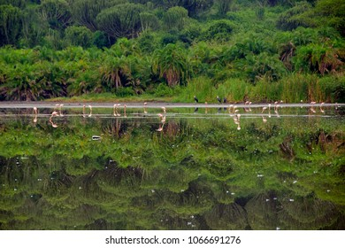 Flamingos in a salt lake, Queen Elizabeth National Park, Uganda