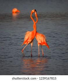Flamingos in the salt pans  - Views around Curacao a small Caribbean island
