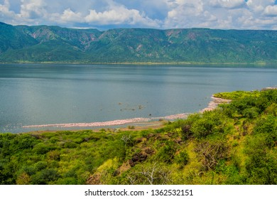 Flamingos at the shores of lake bogoria