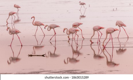 flamingos in small groups in the lagoon of Walvis Bay, Namibia - Shutterstock ID 1863015289