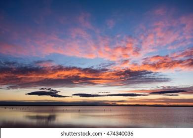 Flamingos at sunrise in Etang de Vaccares near Saintes-Maries-de-la-Mer, Camargue, France