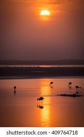 Flamingos at sunrise, Namibia, Africa.