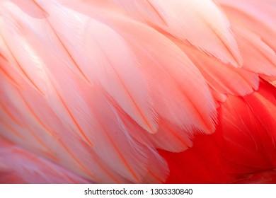 Flamingos and textures