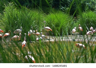 Flamingos viewed from behind tall grass