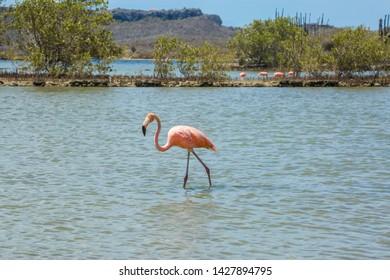 Flamingos - Views around the Caribbean Island of Curacao