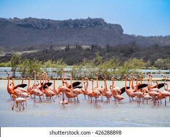 Flamingos - Views around the Caribbean Island of Curacao
