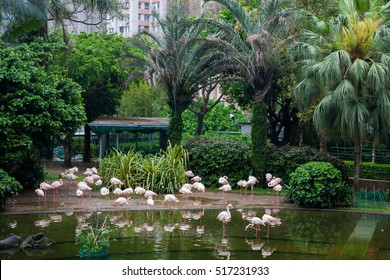 flamingos walk in the park among the trees in Hong Kong