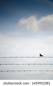 Flanders / Belgium - 07/14/2019 : Bird sitting on a barb wire, symbol of freedom or have been imprisoned in jail of prison.