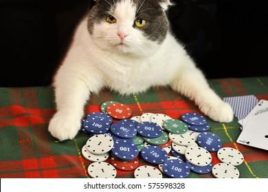 Кот казино алавар игры онлайн покер на