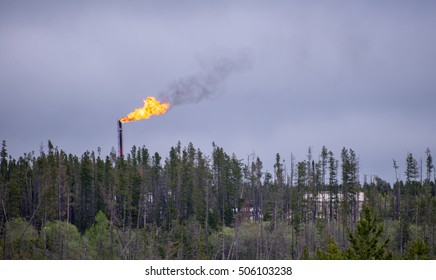 Flare stack with flames above treeline in oilfield