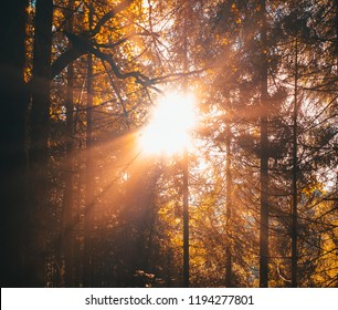 Flare and Sunlight of morning sun filtering through the trees and fog