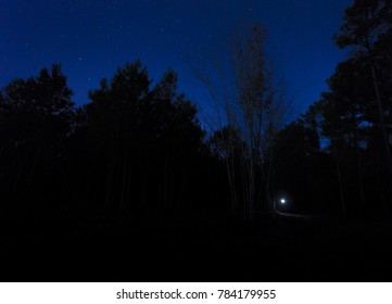 Flashlight in the dark woods with a bright starry sky above