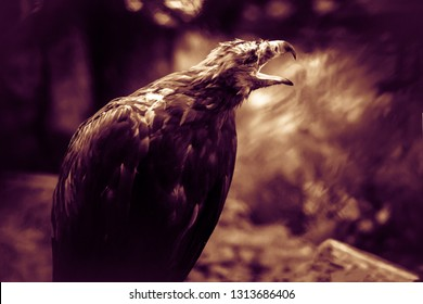 Flashy black eagle, the ominous mystical concept. Bird terrify, the foreboding. Animal from a horror movie.   Night fear and phobia of birds (concept). Animal causing stress and unhappiness.