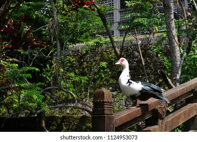 A flashy duck stands on the rail of a bridge