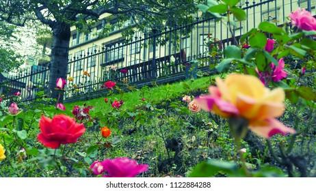 Flashy roses garden