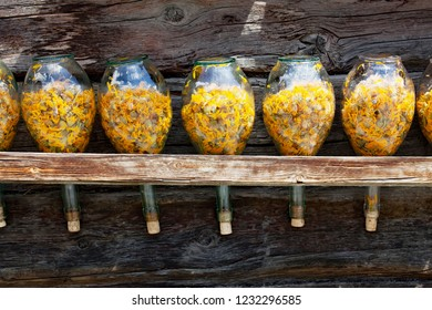 flasks with dried arnica flowers