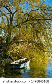 flat boat under old willow tree at lakeshore