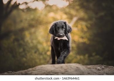 Puppy Coats Images, Stock Photos & Vectors | Shutterstock