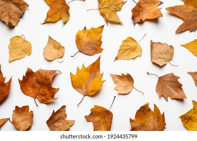 Flat lay composition with autumn leaves on white background