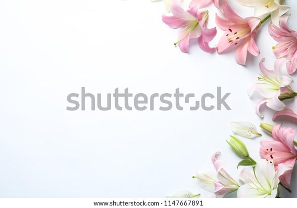 Плоская композиция с красивыми цветущими цветами лилии на белом фоне