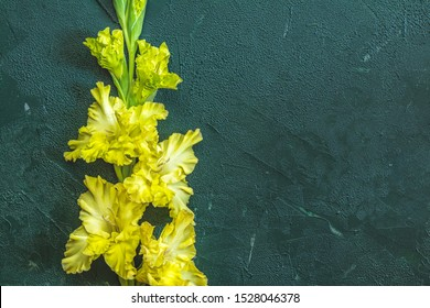Flat lay composition with beautiful gladiolus flowers on dark green concrete background. Pattern of gladiolus with space for your text, holiday greeting card