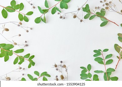 Flat lay composition with branches with green leaves and dry plants on a light background