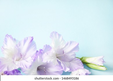 Flat lay composition with delicate light purple gladiolus with copy space on a blue background. Closeup of purple gladiolus flowers, Space for text.