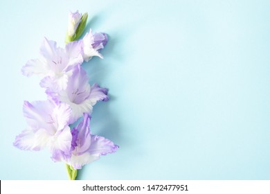 Flat lay composition with fresh branches gladiolus on a blue background with copy space. Closeup of purple gladiolus flowers, Space for text. Flower frame with fresh of purple gladiolus.