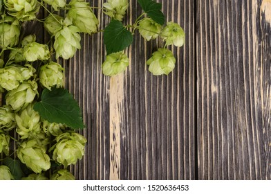 Flat lay composition with pile of green fresh-picked hop cones on old wood, empty place for text Ingredient for beer production (brewing).