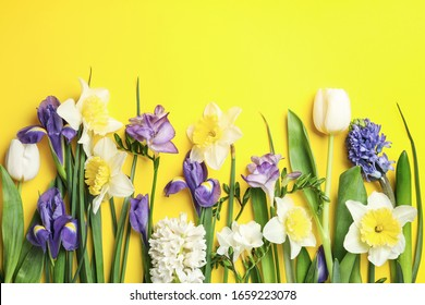 Flat lay composition with spring flowers on yellow background