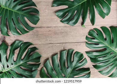 Flat lay creative frame of tropical nature leaves Monstera on rustic wood grunge background.