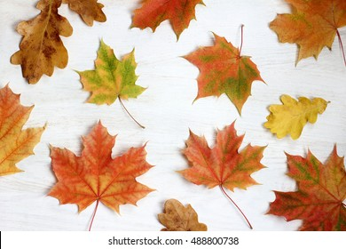 flat lay of fallen maple leaves on a light background top view / golden autumn