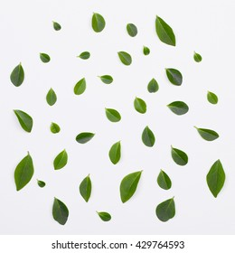 Flat lay. Green leaves pattern on white background