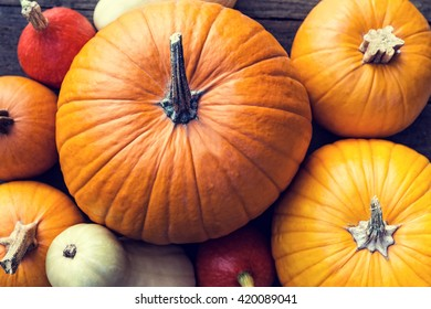 Flat lay, lots of different sorts of orange and yellow Pumpkins