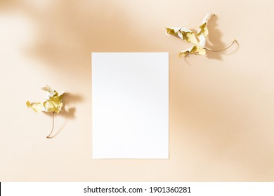 Flat Lay mockup blank paper sheet card with dry leaves and contrasting shadows on color background