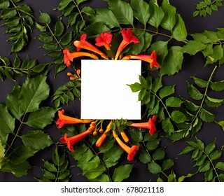 Flat lay nature concept, mockup. Lying on black background with orange Campsis flowers and green leaves. Top view