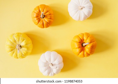 Flat lay style of fresh organic pumpkins on yellow background, halloween and thanksgiving concept