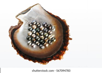 Flat lay view of Fiji Black lip oyster shell with selection of black pearls. Studio shot isolated on white background.