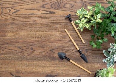 Flat lay view of set gardening tools, rake, shovel and plants in pots on wooden table with copy space